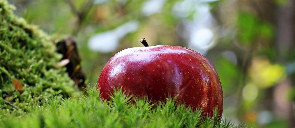 Co ma jabłko do brzozy? Alergie krzyżowe – jak z nimi walczyć?