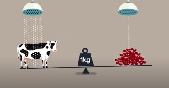 Jak ograniczyć ślad węglowy i wodny żywności? Jedzmy dobrze!