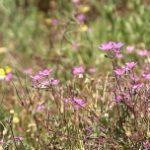 Badania naukowców potwierdzają, że w walce z wirusami skuteczne są ekstrakty roślinne. Mogą chronić także przed koronawirusem [DEPESZA]